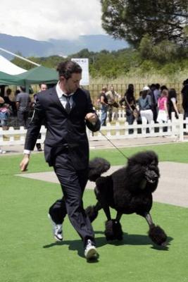 4d1bbc69ca760-toelettatura-per-cani-e-gatti-di-mario-cucciolito-copia